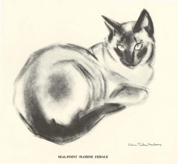 Seal Point Siamese C. Turlay Newberry