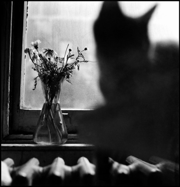Cat, NY 1950 Elliott Erwitt
