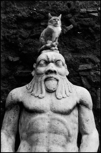 Cat Posing on a Statue, Rome, Elliott Erwitt