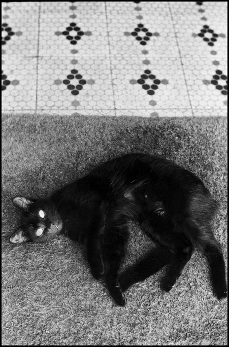 Elliott Erwitt, Black Cat, South America 1972