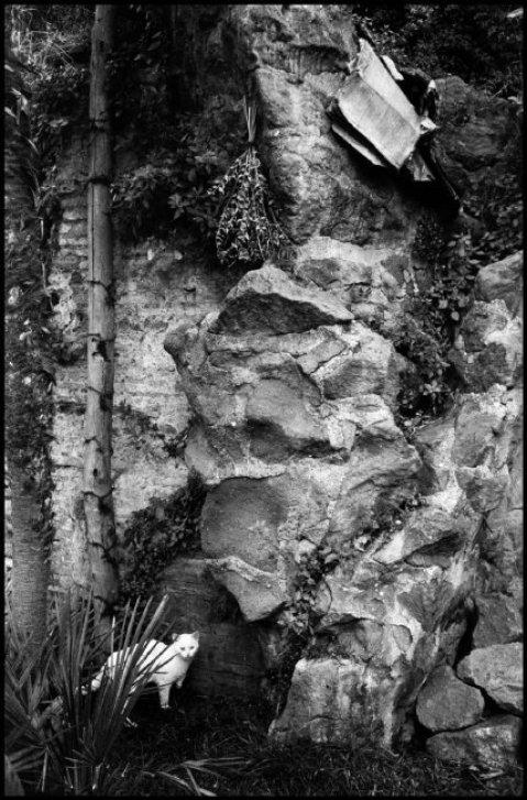 White Cat, Rome 1955, Elliott Erwitt