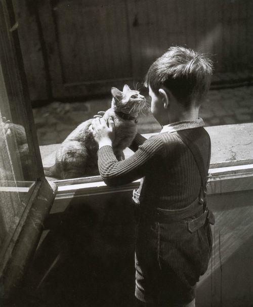 The Caretaker's Cat, Willy Ronis, Le chat de la concierge, Paris 1947