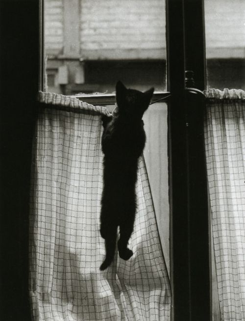 Willy Ronis, from Les chats de Willy Ronis