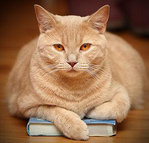 cat book reviews index at The Great Cat