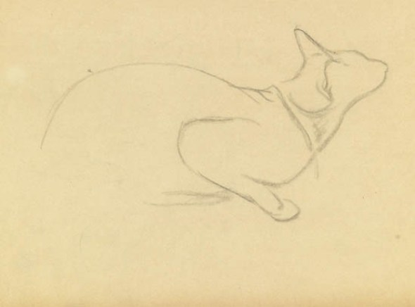 Study of a Cat, Theophile Steinlen