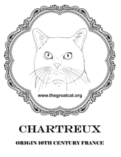 Chartreux Head from Cat Breeds Coloring Book One by L.A. Vocelle