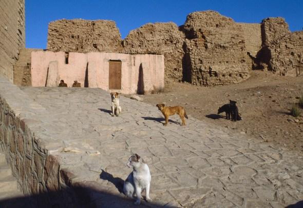 Cat, Aswan Egypt, 1989 Ferdinando Scianna