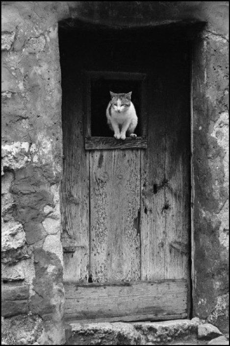 Cat in Old Door, Ferdinando Scianna 1962