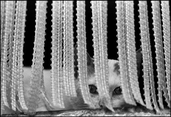 Ferdinando Scianna, Cat 1983 Italy