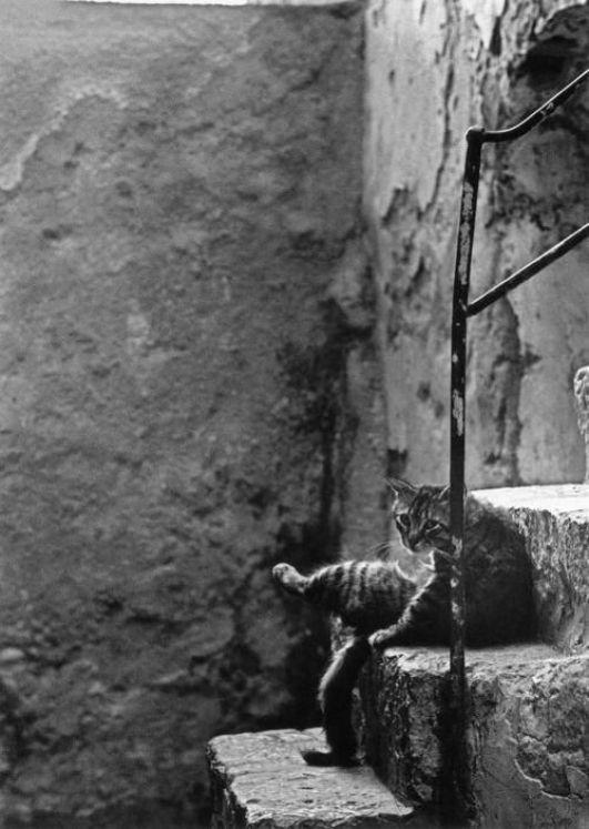 Ferdinando Scianna Cat on Stairs Sicily