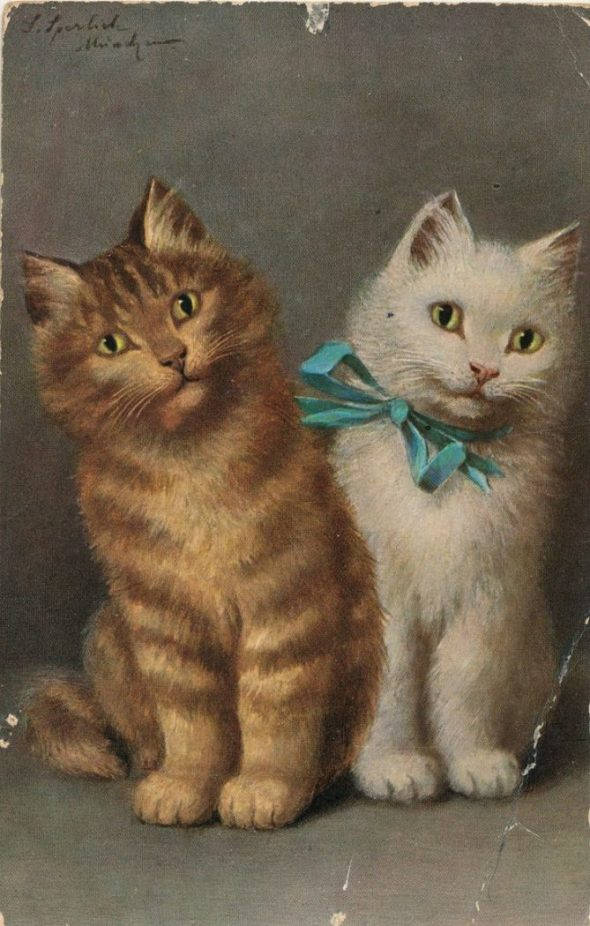Sophie Sperlich, Tabby and White Cats