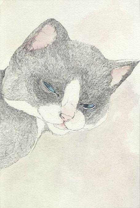 Midori Yamada22-Grey and White Cat Face