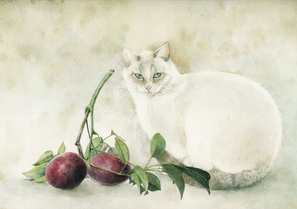 Midori Yamada39-White cat and fruit