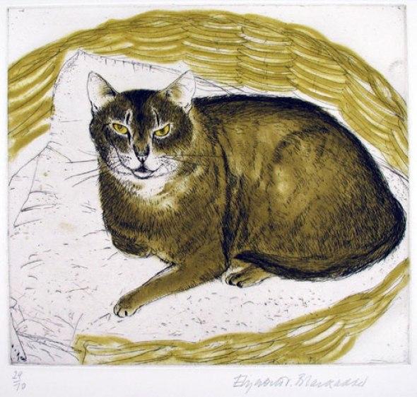 Abyssinian Cat. Elizabeth Blackadder
