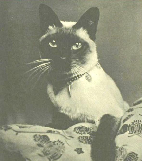 New Boy, Vivien Leigh's Siamese cat