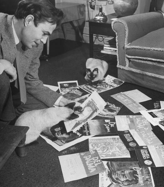James Mason and Siamese cats
