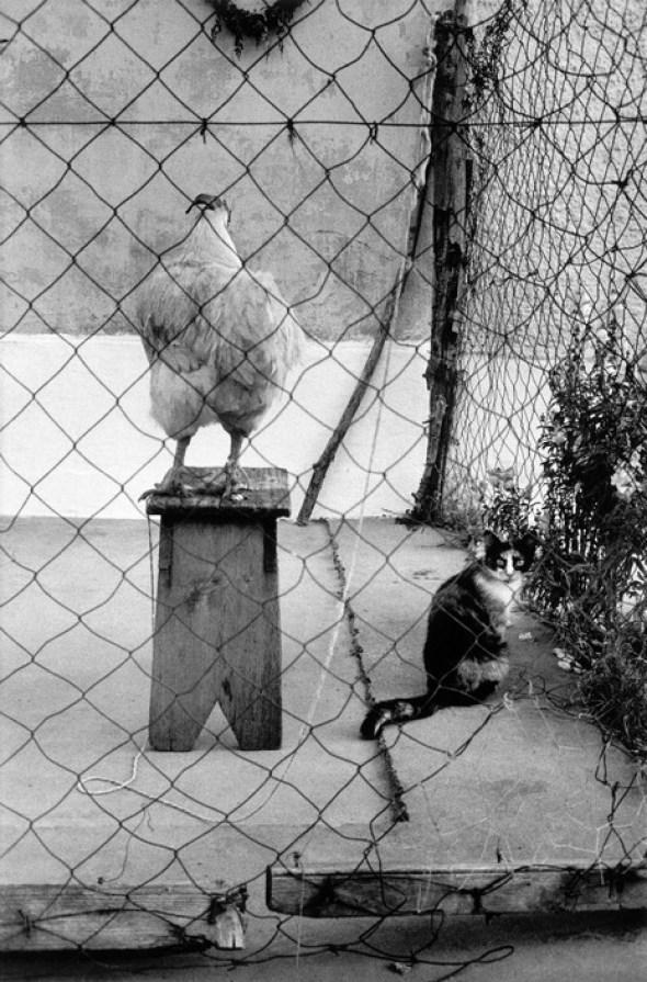 Josef Koudelka, Cat, GREECE, 1981