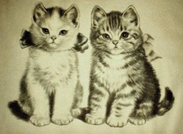 Meta Pluckebaum, Brother and Sister Kittens