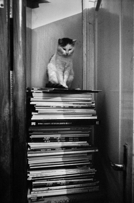 Josef Koudelka, Cat