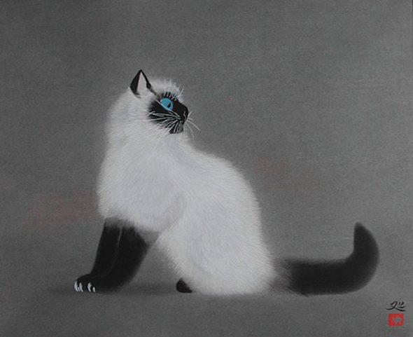 Cat, Matazo Kayama