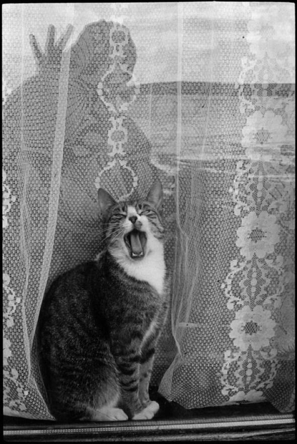 Cat in a Window, Tory Island, Ireland Martine Franck