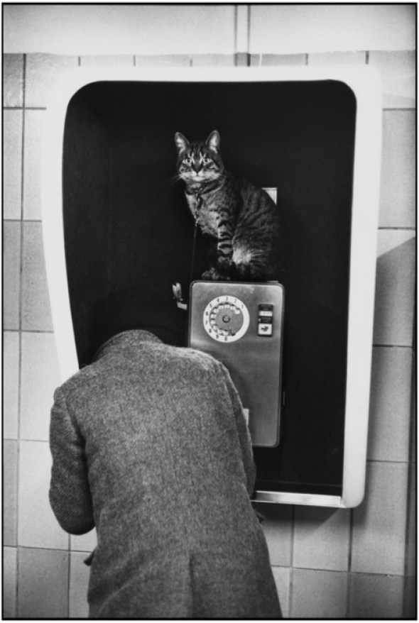 Cat on a Pay Phone, Paris Subway station Tuileries. 1977 Martine Franck