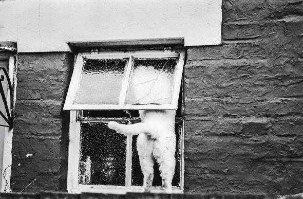 White Cat, Hampshire, c.1987, Jane Bown