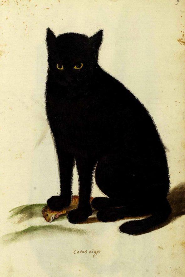 Ulisse Aldrovandi, Black Cat, 16th Century