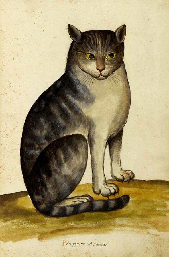 Ulisse Aldrovandi, Seated Cat, 16th century