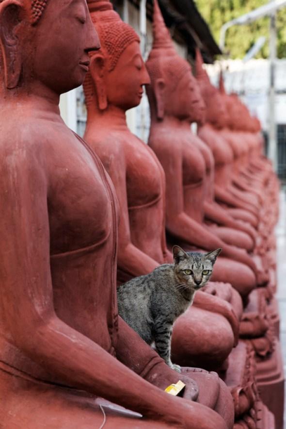 Terra Cotta Statues and Cat, Thailand, 2007 Richard Kalvar