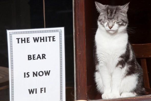 The White Bear Pub on St. John Street, with a Closed-Eyed Cat, London, 2009 Richard Kalvar