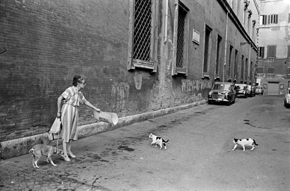 Woman Protecting her Fearful Dog from Ferocious Cats, 1978, Rome, Richard Kalvar