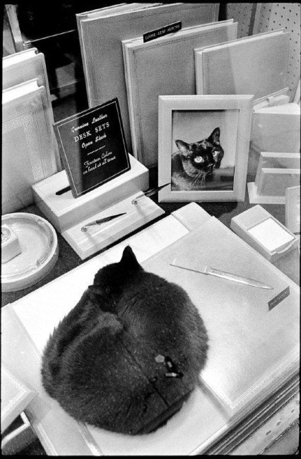 Cat Curled up Sleeping in a Store Window, 1976, NYC Richard Kalvar