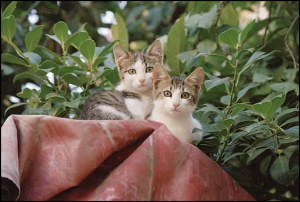 Cats above a Doorway, Edessa, Greece, 2003, Richard Kalvar.