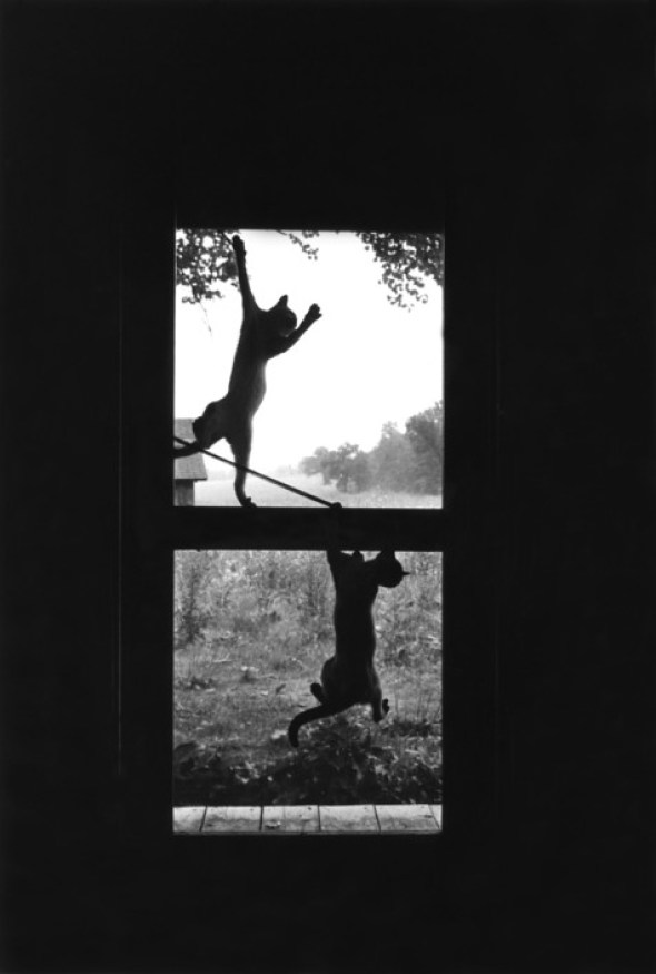 Cats on Screen Door, Woodstock, NY, 1969 Richard Kalvar