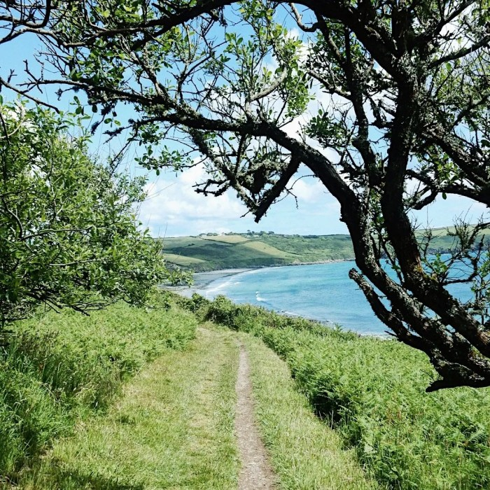 Cornwall Coastpath Pendower Beach Sea Tree