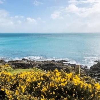 Gorse, sea Cornwall coast