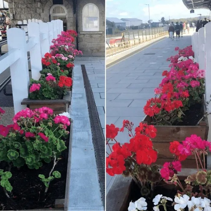 Plant posts with with flowers at St Erth Tain Station