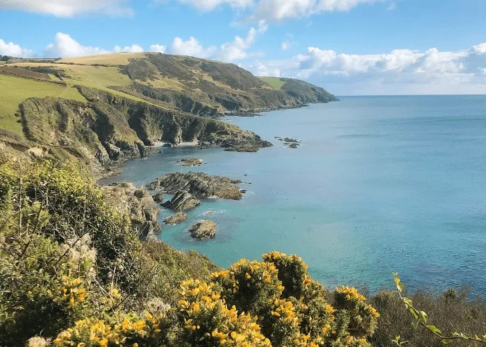 the sea and coastline with gorse in Cornwall