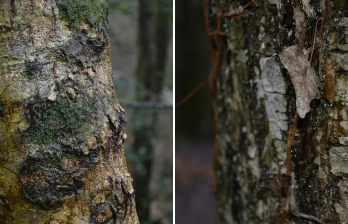Textures on tree barks in winter