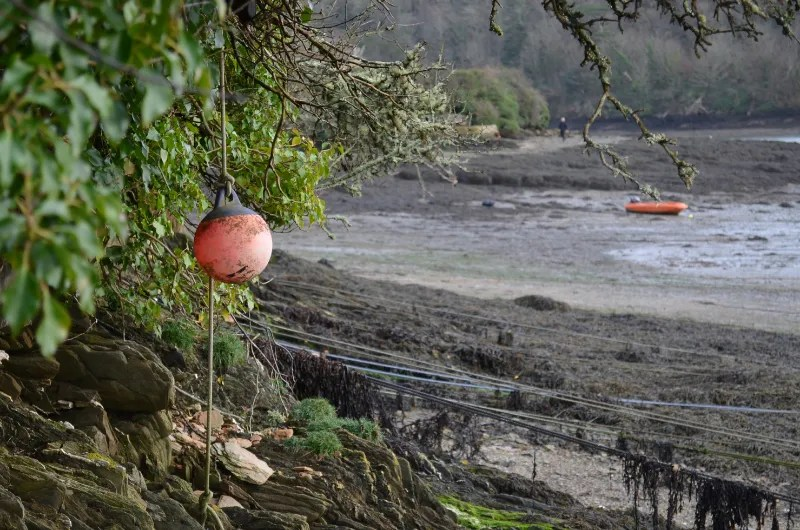 A fishing buoy hanging off a branch at Percuil