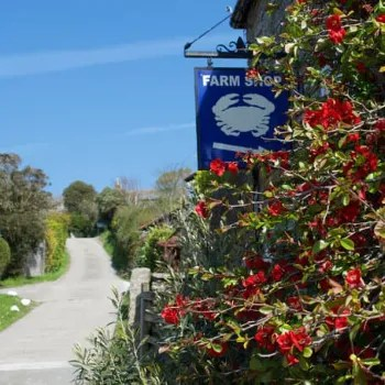 Curgurrell Farm Shop Sign on the wall with red flowers