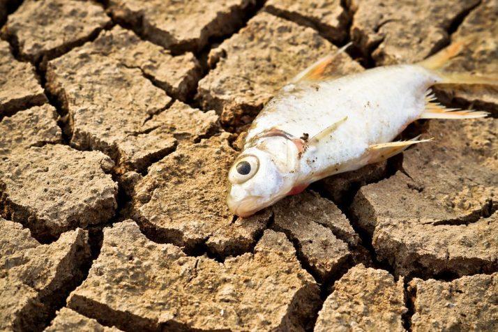 魚油 生態破壞