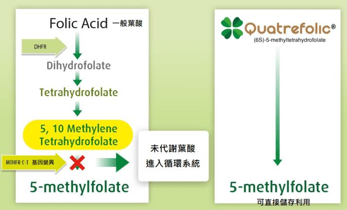 葉酸補充推薦