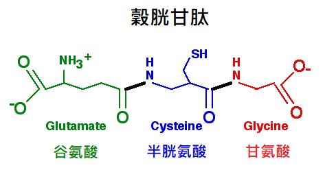 穀胱甘肽是什麼