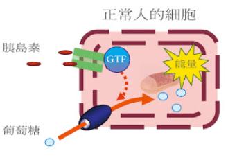 鉻功效 GTF糖尿病降血糖機制