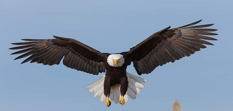 Eagle In The Sky By Ankit Bhatt