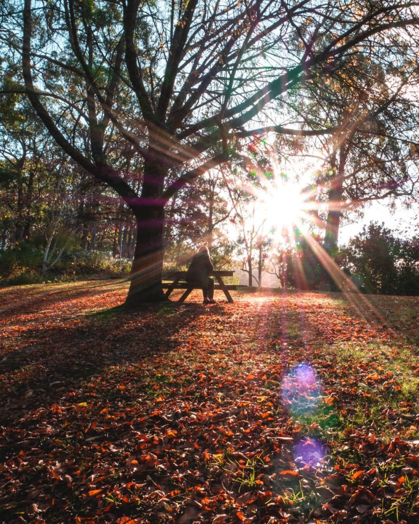 Figure on park bench with autumn leaves and sun rays