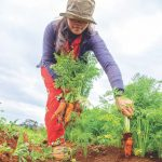 Gardening benefits on body and mind