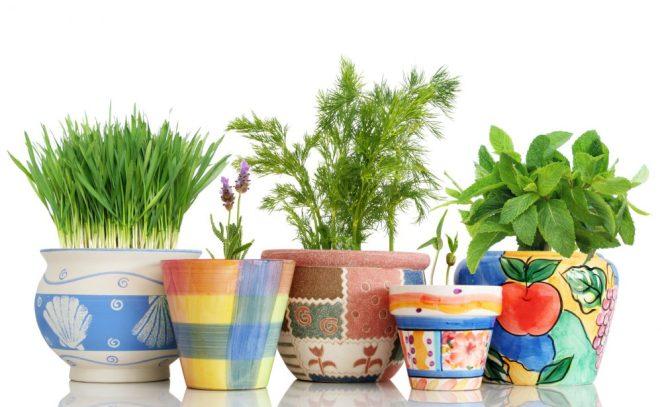 best garden planters by type